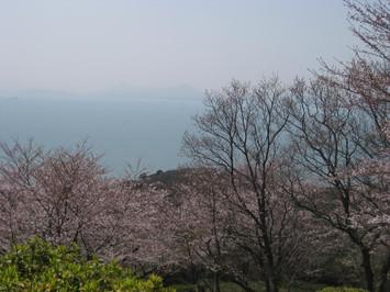 Sakuraumi_2